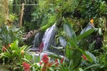 De Orchideeen Hoeve - Tropische tuin